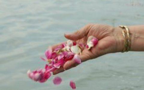 Senya strooit rozenblaadjes uit over het water
